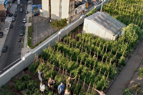 Urbane Landwirtschaft